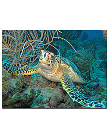 Ready2HangArt 'Turtle' Canvas Wall Art Print