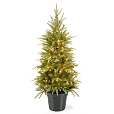4' Weeping Spruce Wrapped Tree in Green Pot with 100 Clear Lights