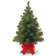National Tree Company 2' Noble Spruce Tree with Burlap Bag
