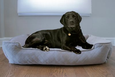 Arlee Lounger and Cuddler Style Pet Bed, Medium