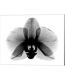 Orchid Small Xray By Bert Myers Canvas Art