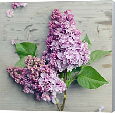 Fresh Lavender Blooms by Sarah Gardner Canvas Art