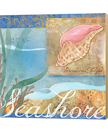 Seashells I By Fiona Stokes-Gilbert Canvas Art