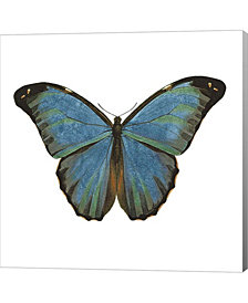 Butterfly Botanica3 By Tre Sorelle Studios Canvas Art