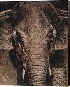 Elephant Portrait by Michael Jackson Canvas Art