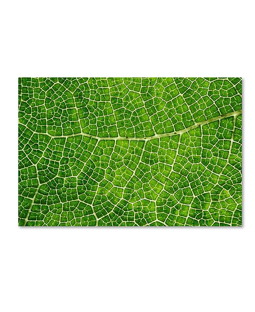 "Trademark Global Cora Niele 'Green Leaf Texture' Canvas Art, 22"" x 32"""