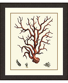 Amanti Art Red Coral I  Framed Art Print