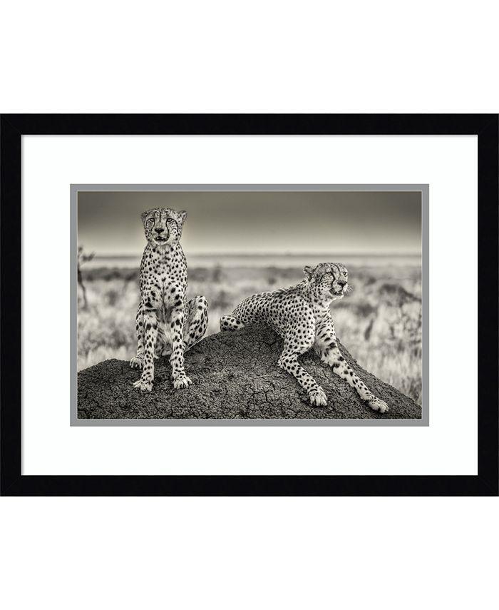 Amanti Art - Two Cheetahs Watching Out 21x16 Framed Art Print