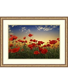 Amanti Art Poppies  Framed Art Print