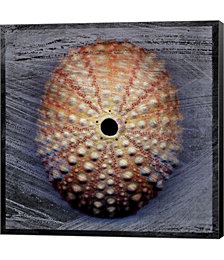Sea Urchin 1 by John W. Golden Canvas Art