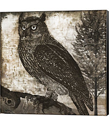 Owl 2 by Color Bakery Canvas Art