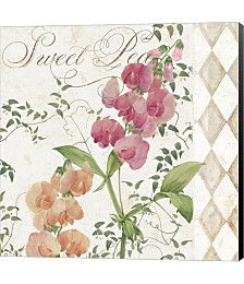 Sweet Pea by Color Bakery Canvas Art