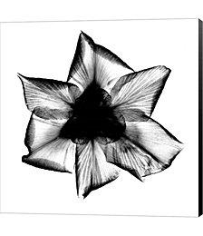 Iris, Japanese X-Ray by Bert Myers Canvas Art