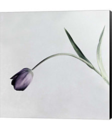 Tulip I by Symposium Design Canvas Art