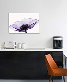 """Anemone II"" by Robert Coop Gallery-Wrapped Canvas Print (26 x 40 x 0.75)"