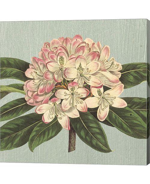 Metaverse Rhododendron by Sarah Elizabeth Chilton Canvas Art