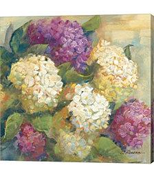 Hydrangea Delight II by Carol Rowan Canvas Art