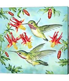 Calliopes Hummingbirds by Rosiland Solomon Canvas Art