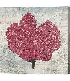 Fan Coral by Ted Broome Canvas Art