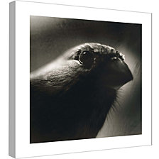 Ptm Images,Bird'S Eye Decorative Canvas Wall Art