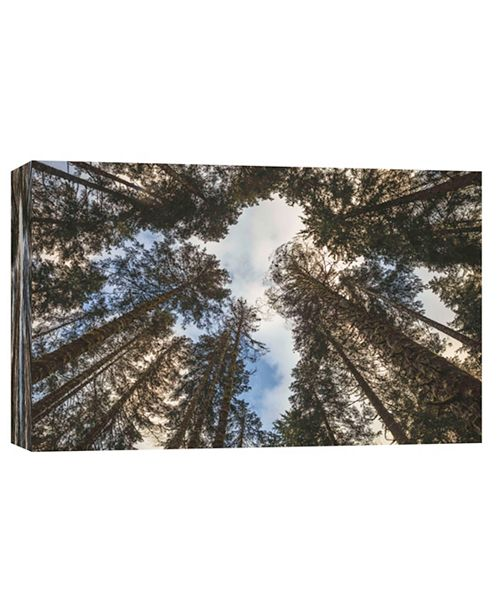 PTM Images In The Trees Decorative Canvas Wall Art