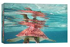 Ptm Images,Belize Turtle Decorative Canvas Wall Art