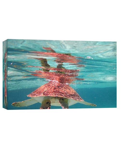 PTM Images Turtle Decorative Canvas Wall Art