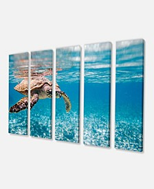 "Designart Large Hawksbill Sea Turtle Canvas Art Print - 60"" X 28"" - 5 Panels"
