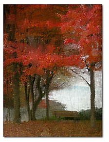 """Maple Tree Walk Gallery-Wrapped Canvas Wall Art - 16"""" x 20"""""""