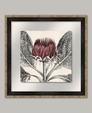 Arctium Ii in Rose Framed Giclee Wall Art - 22