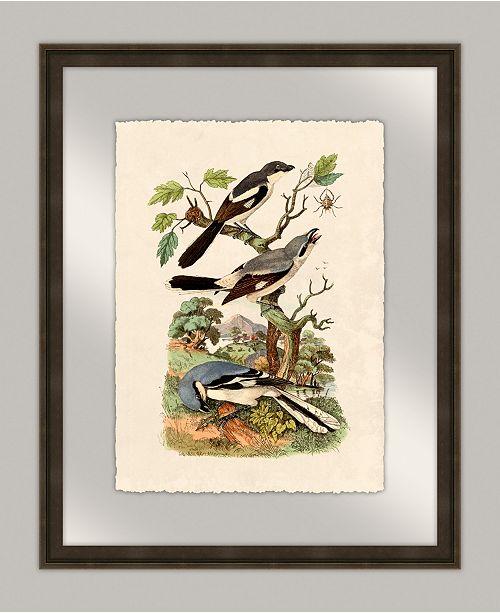 "Melissa Van Hise Oiseaux I Framed Giclee Wall Art - 20"" x 25"" x 2"""