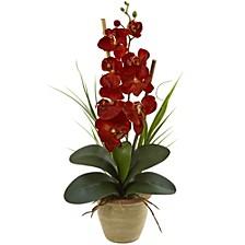 Phalaenopsis Orchid Harvest Silk Arrangement in Ceramic Arrangement
