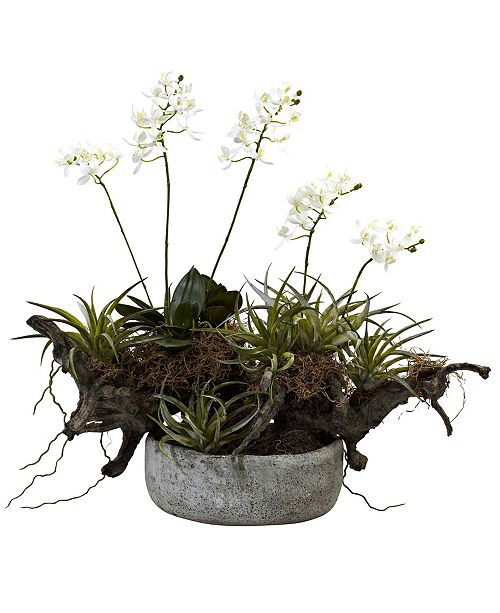Nearly Natural Orchid and Succulent Garden w/ Driftwood and Decorative Vase