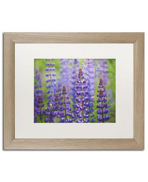 "Trademark Global Cora Niele 'Blue Lupine Flowers' Matted Framed Art - 20"" x 16"" x 0.5"""