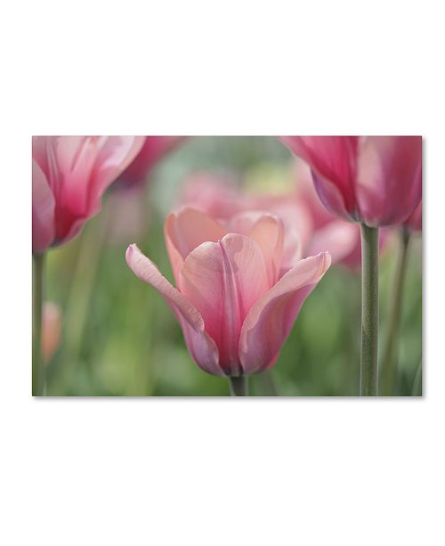 "Trademark Global Cora Niele 'Tulip Mirella' Canvas Art - 24"" x 16"" x 2"""