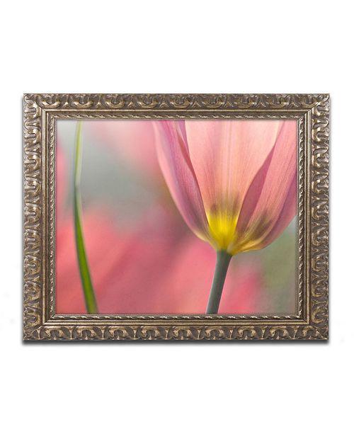 "Trademark Global Cora Niele 'Tulipa Planifolia' Ornate Framed Art - 20"" x 16"" x 0.5"""