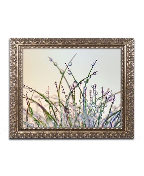 "Trademark Global Cora Niele 'Dewy Grass' Ornate Framed Art - 20"" x 16"" x 0.5"""