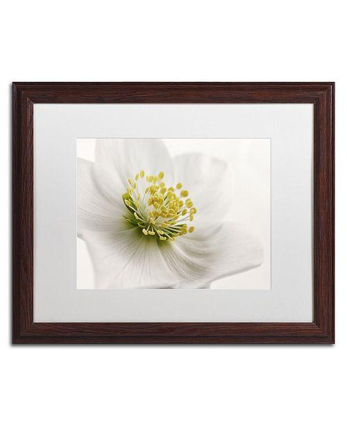 "Trademark Global Cora Niele 'White Helleborus' Matted Framed Art - 20"" x 16"" x 0.5"""