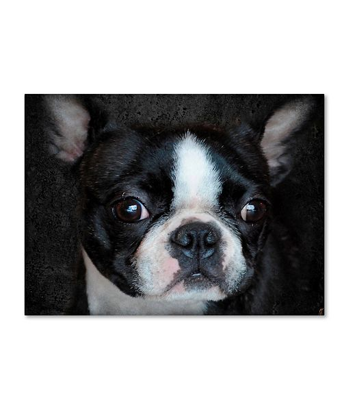 "Trademark Global Jai Johnson 'Boston Terrier Portrait' Canvas Art - 32"" x 24"" x 2"""