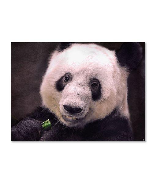 "Trademark Global Jai Johnson 'Giant Panda Bear' Canvas Art - 32"" x 24"" x 2"""