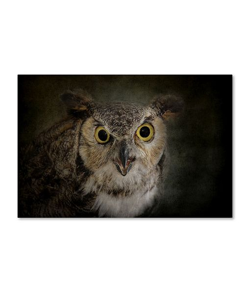 "Trademark Global Jai Johnson 'Great Horned Owl' Canvas Art - 19"" x 12"" x 2"""