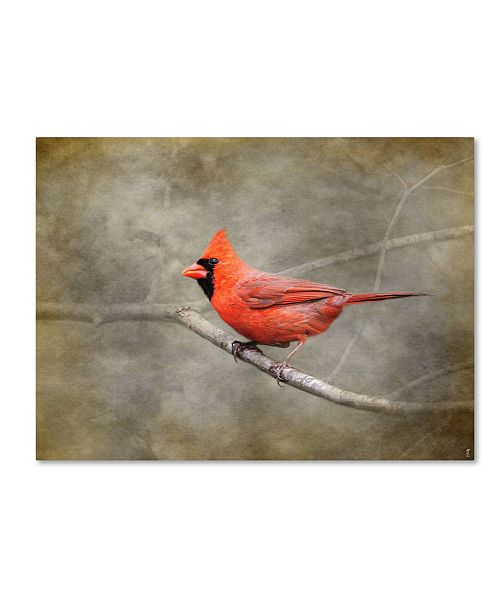 "Trademark Global Jai Johnson 'His Red Glory Cardinal' Canvas Art - 32"" x 24"" x 2"""