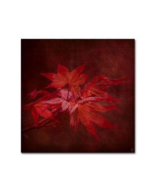 "Trademark Global Jai Johnson 'Japanese Maple' Canvas Art - 14"" x 14"" x 2"""