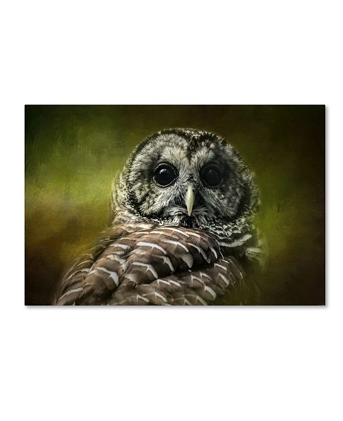 "Trademark Global Jai Johnson 'Barred Owl In The Grove' Canvas Art - 19"" x 12"" x 2"""