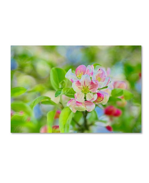 "Trademark Global Cora Niele 'Apple Blossom' Canvas Art - 24"" x 16"" x 2"""