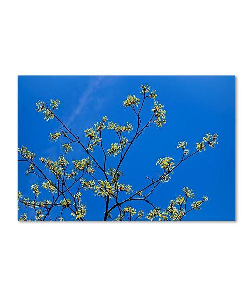 "Trademark Global Cora Niele 'Maple Flowers' Canvas Art - 19"" x 12"" x 2"""