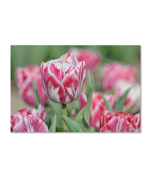 "Trademark Global Cora Niele 'Tulip Rembrandtspaendonck' Canvas Art - 24"" x 16"" x 2"""