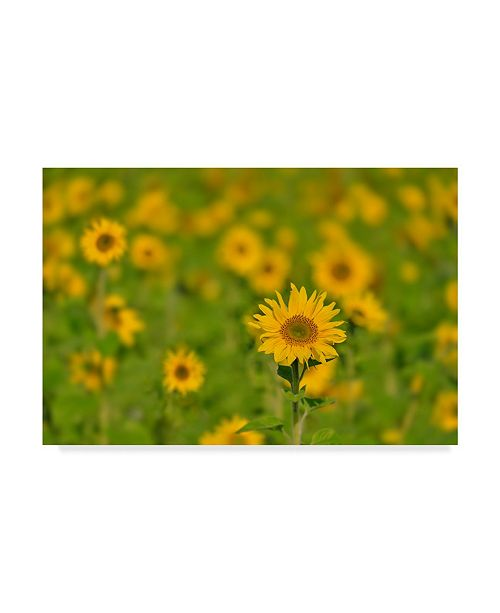 "Trademark Global Cora Niele 'Sunflower Field' Canvas Art - 32"" x 22"" x 2"""