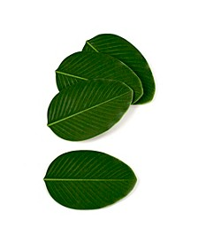 BaliHai Coasters - Set of 4 - Heliconia