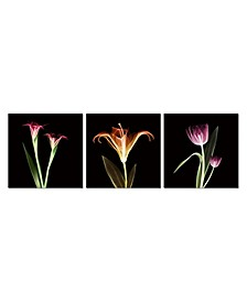 """Decor Tropical 3 Piece Wrapped Canvas Wall Art X-Ray Design -27"""" x 82"""""""